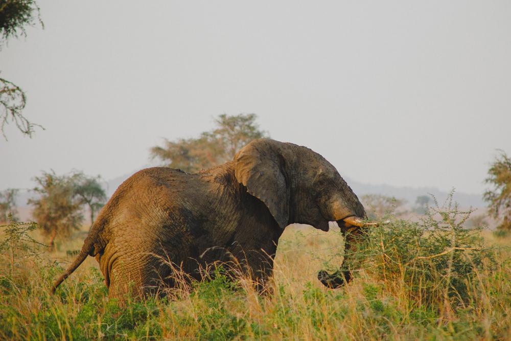 Travel_Uganda-017.jpg