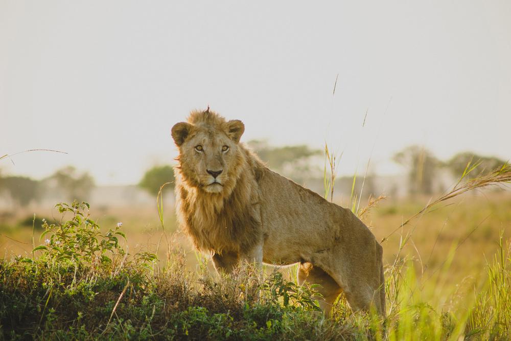 Travel_Uganda-022.jpg
