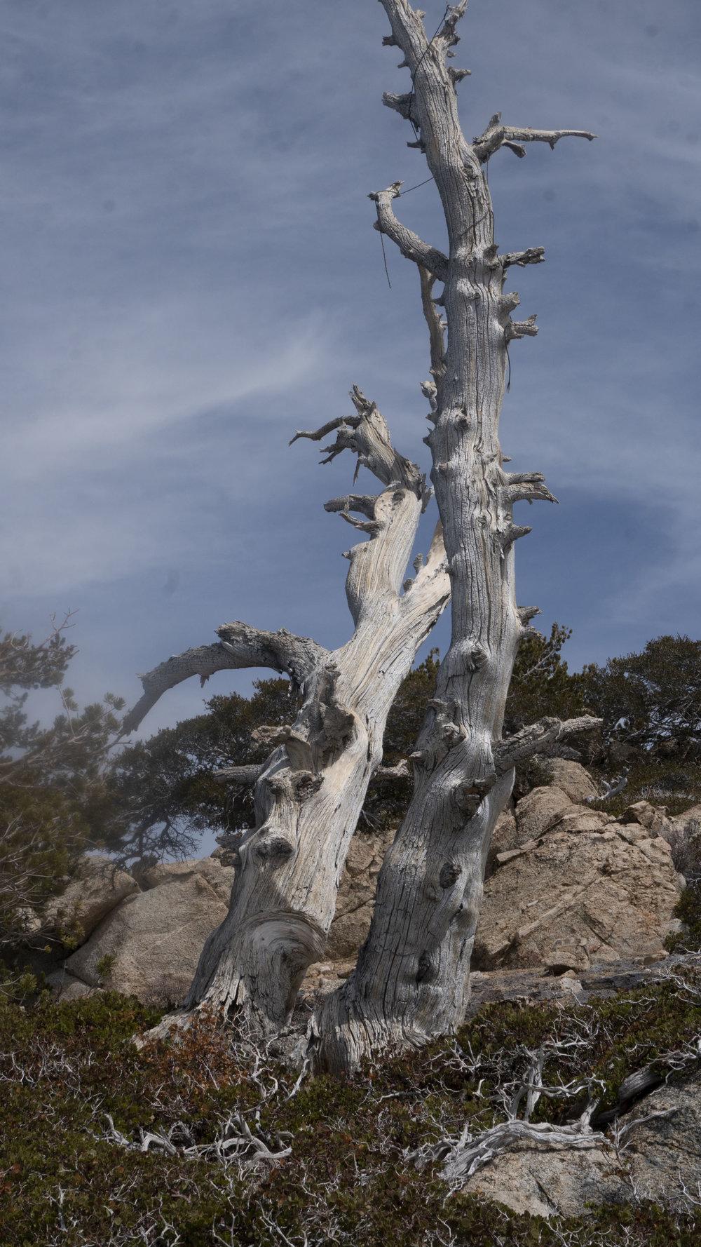 Tree_sky.jpg