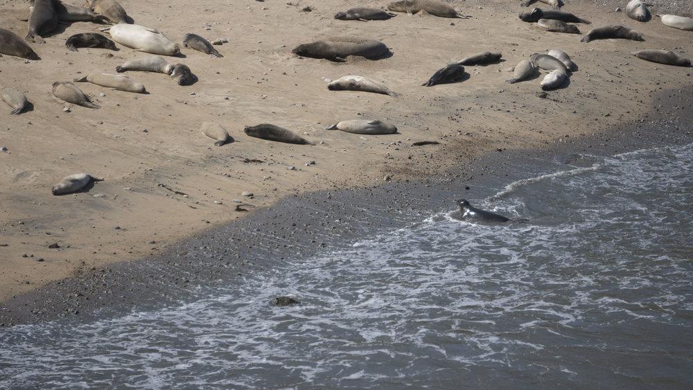 Seals 6.jpg