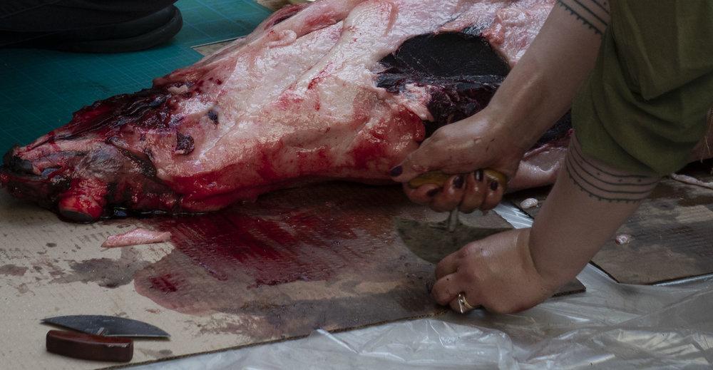Seal Hands 8.jpg