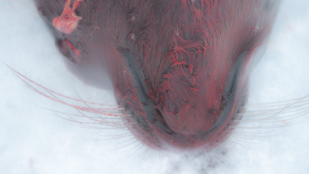 Seal whiskers.jpg