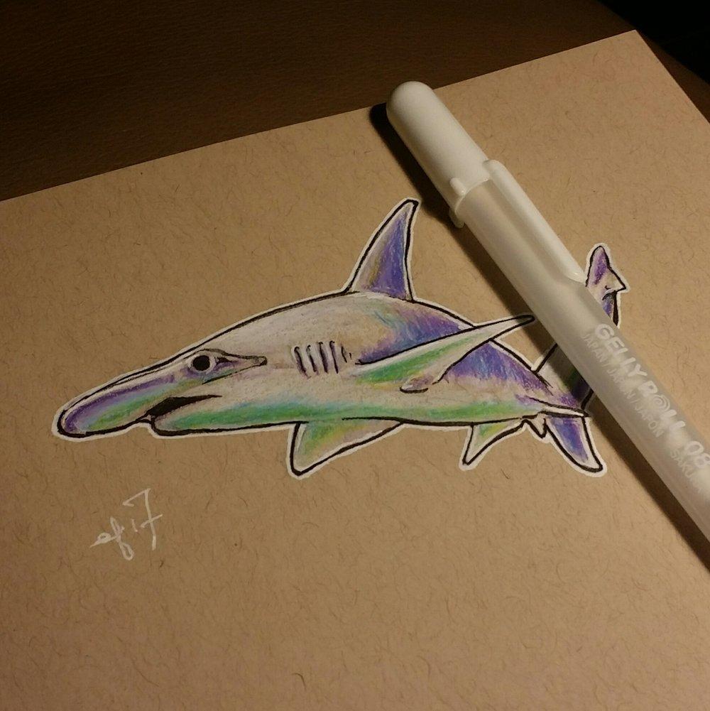 0682 bonnethead shark elisa friesen 2017.jpg