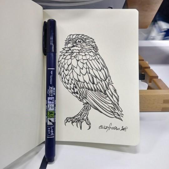 0996 burrowing owl sketch.jpg