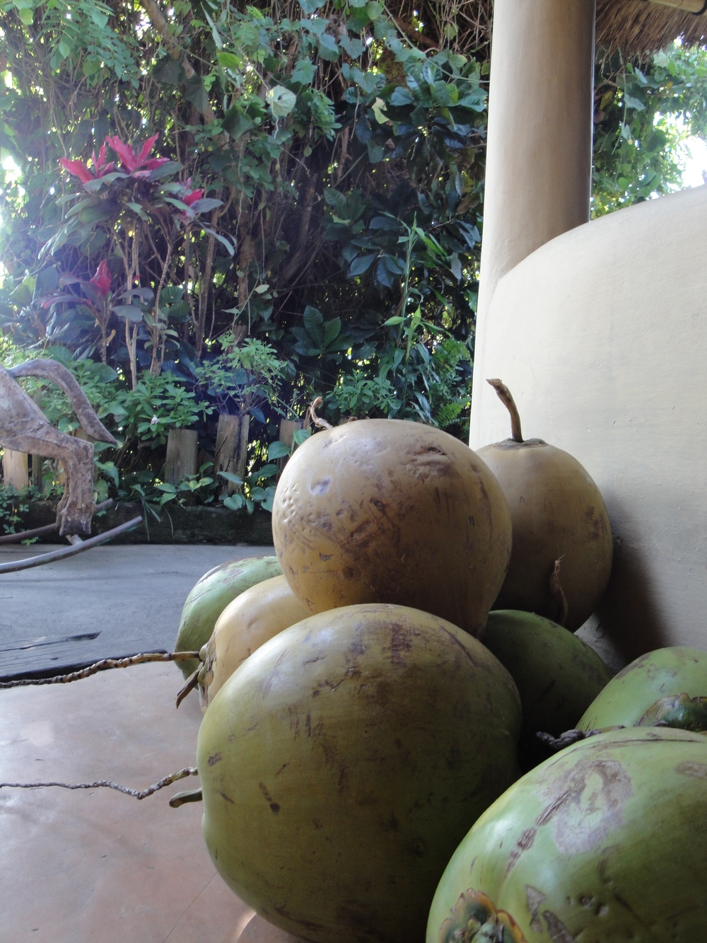 Coconuts waiting to be ordered.