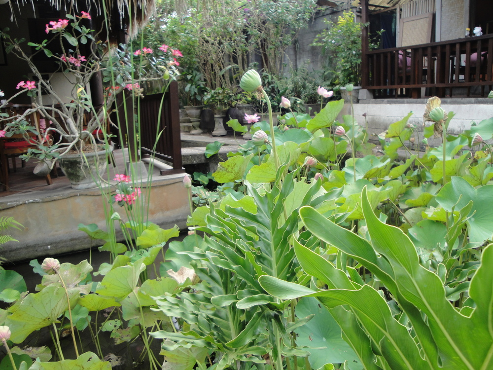 Lotus ponds...