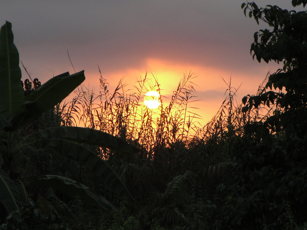 Sunset in the rice fields