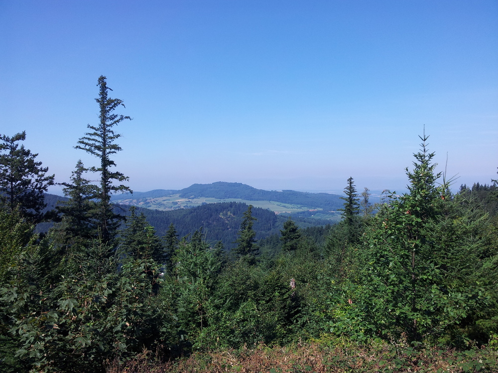 The black forest in summer is soooo wonderful