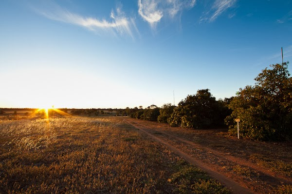 Barham_Avocados_Sarah_Anderson_Victoria_avos_farm_sunrise_sunset_trees_tracks_countryside