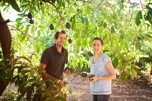 Barham_Avocados_Sarah_Anderson_Victoria_trees_avo_couple