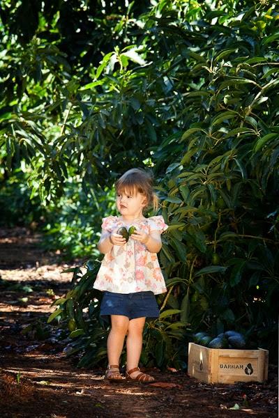 Barham_Avocados_Sarah_Anderson_Victoria_child_avo_trees