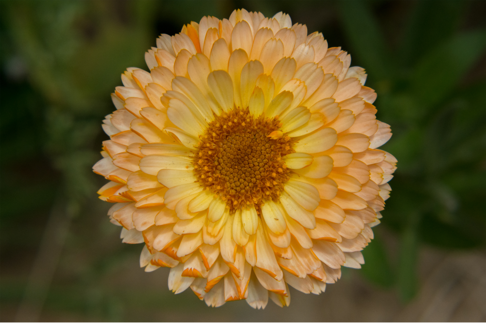 BenMiller_LighterOrangeFlower.png