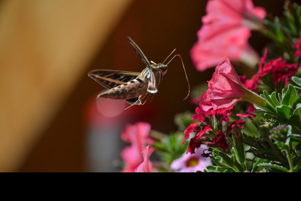 BenMiller_Moth.png