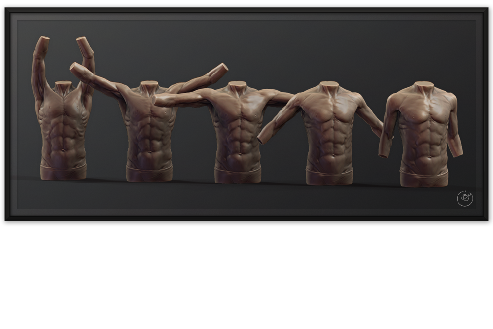 Torso Anatomy Blendshapes #1