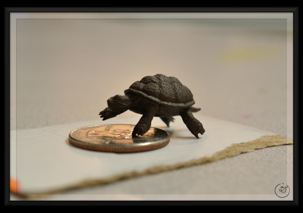 BenMiller_Turtle-QuarterScale-1500px.png