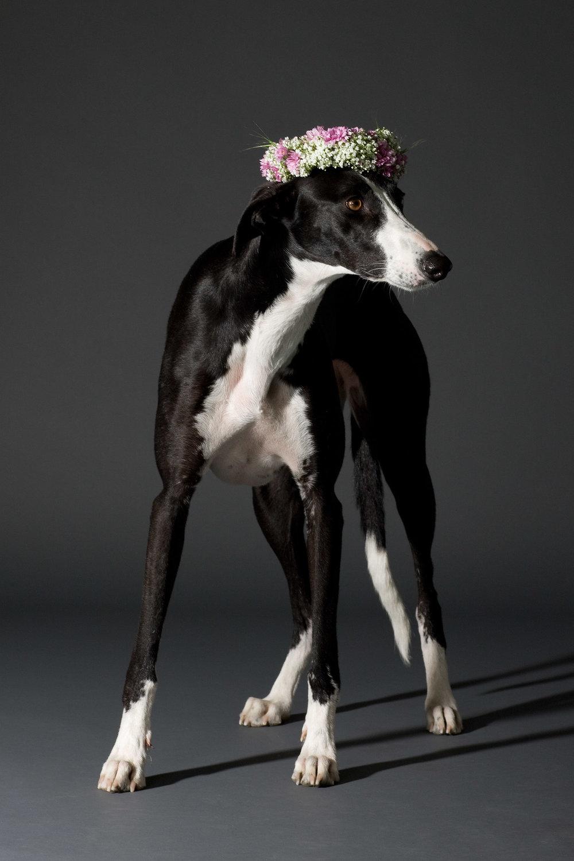 Blumen 3000 hunde+blumen