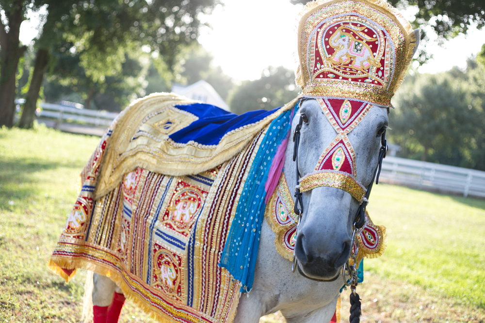 South Asian / Indian Weddings - Celebrating time honored cultural traditions, our Baraat horses are draped in traditional hand made fabrics imported from India.