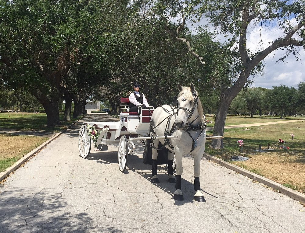 horse drawn funeral orlando horse carriage