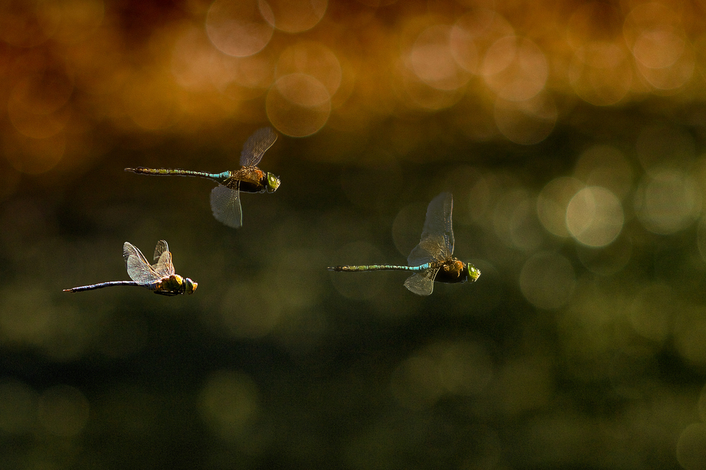 Flying trio by Ricardo  Alves - Downloaded from 500px.jpg
