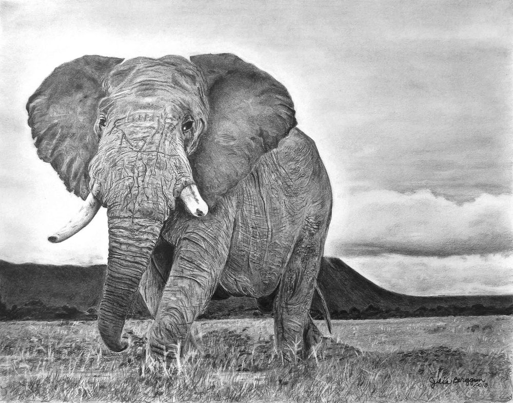 Elephant-FD.jpg