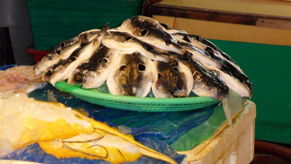 jedovatá ryba fugu