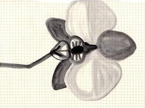 Flower.copyright+Andrew+Seto+2014(621KB).jpg