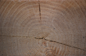 detail for oak 11 300.jpg