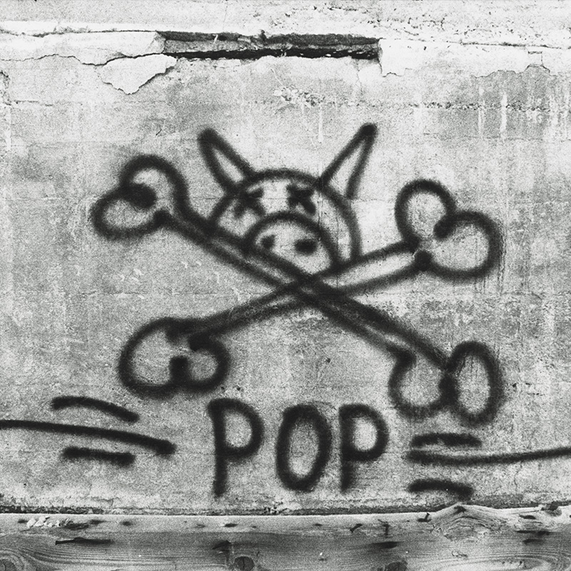 stecyk_1968_pig cross pop.jpg