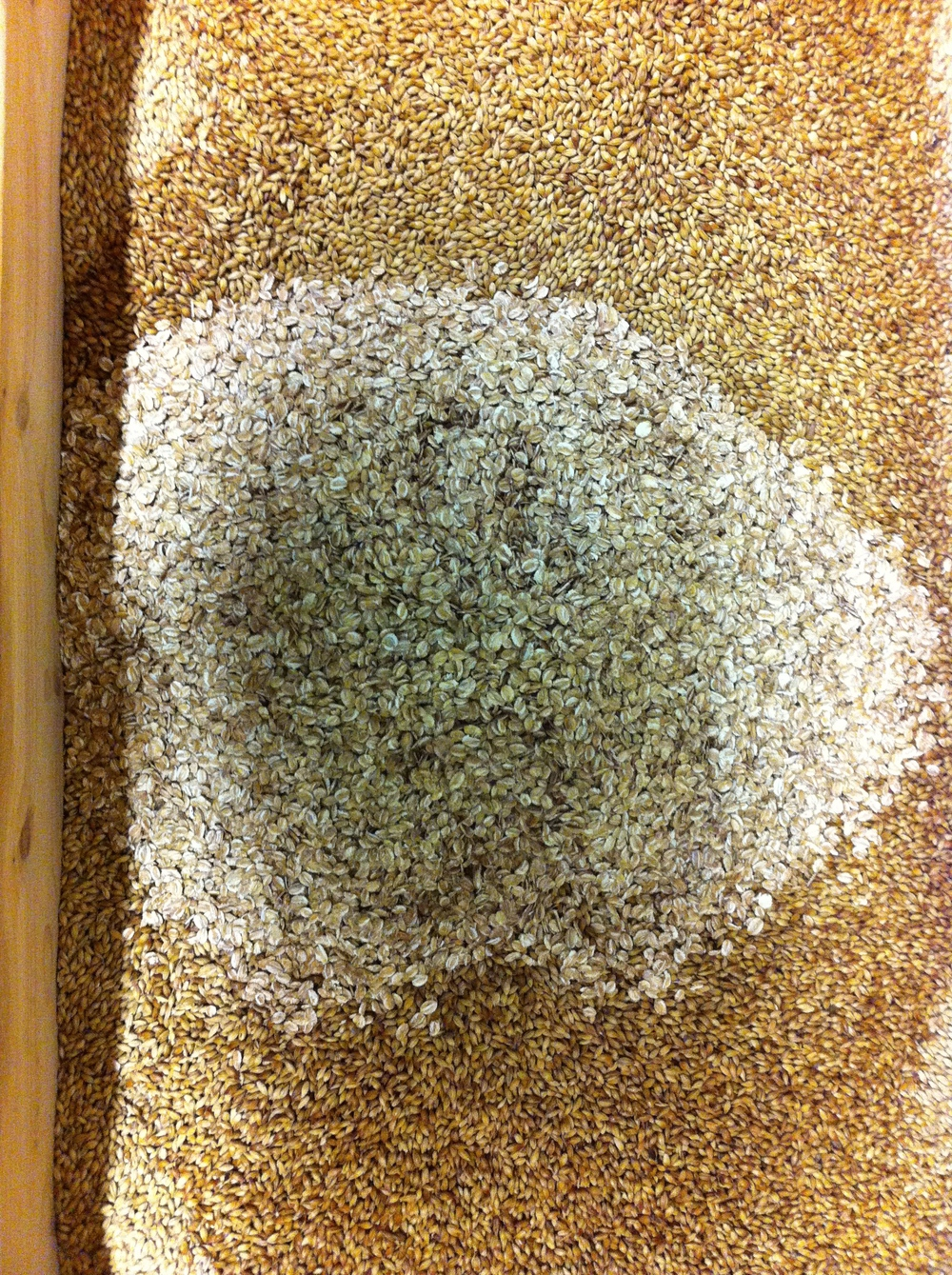 Docs Pale Ale grain!  Oats in the middle and barley sneaking in on the side.
