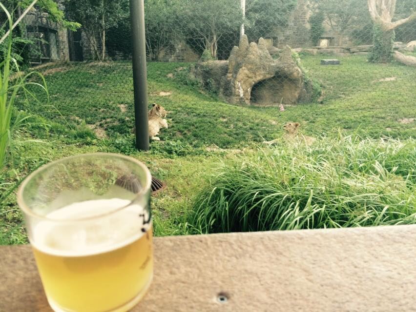 Enjoying a pale lager with the big cats.