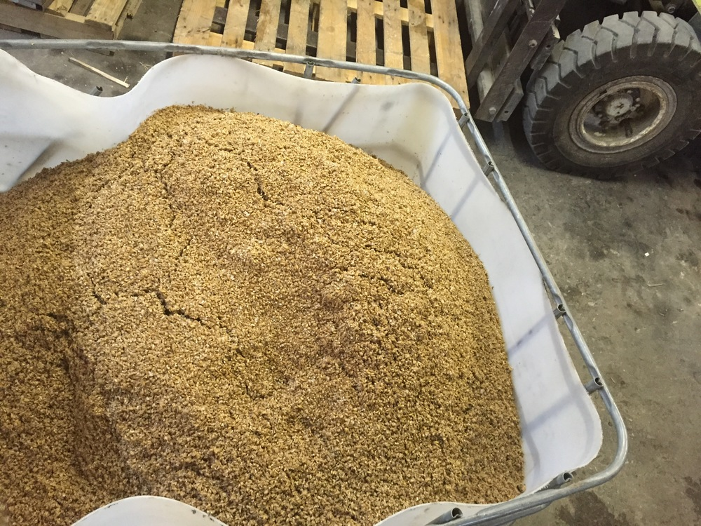 This is the spent grain right after brewing and before the cows are allowed to feast on it.  This grain comes out of the Mash Tun at 150-160F and needs 24 hrs to cool off.