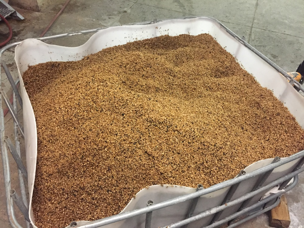 Spent grain from Underground Safety Stout