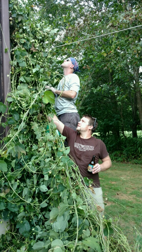 Chris and Roy finding some good hop cones.