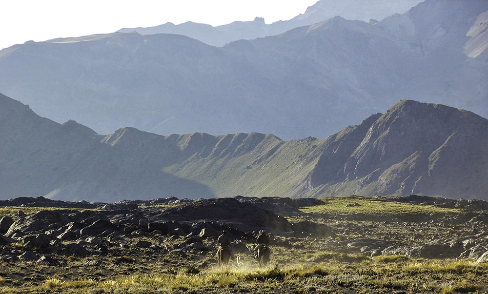Chile-Desert-Horseback-Riding-Valle-Los-Condores.jpg