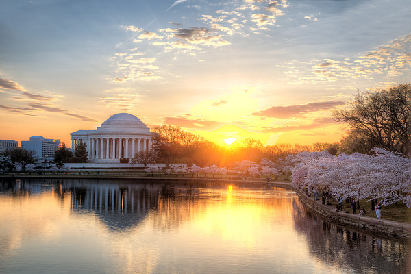 jeffersonmemorialandcherryblossoms_angelapan.jpg