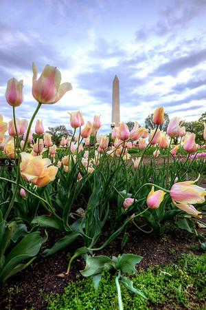 tulip-library-M_angelapan.jpg