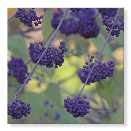 StudioEl_TR21791-GLA--Bremer--Purple_Berries.jpg
