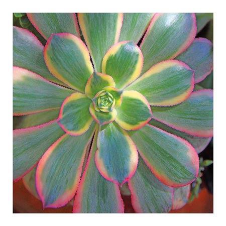 StudioEl_TR25209--Bremer--Succulent.jpg