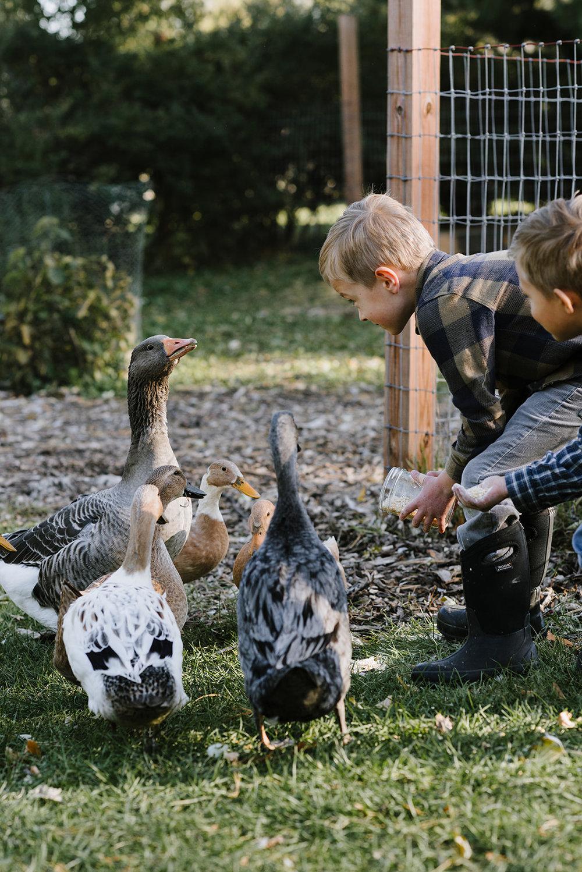 Ducks-17.jpg