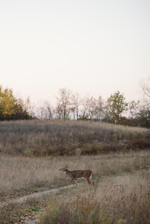 Prairie-225.jpg