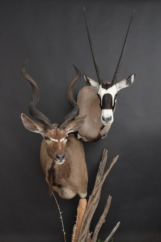 Double Pedestal  Kudu Gemsbok  Double (6)