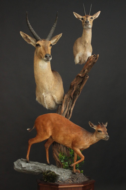 Triple pedestal on Walnut  Triple (1)