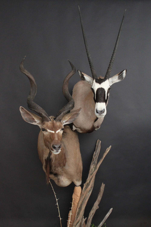Double Ped Kudu.jpg