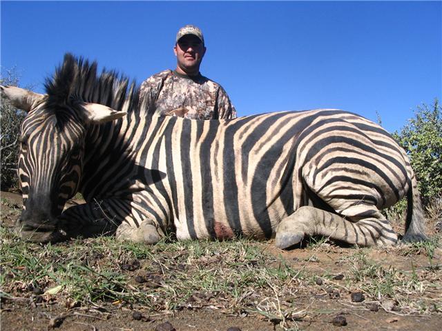 Munros Zebra.jpg