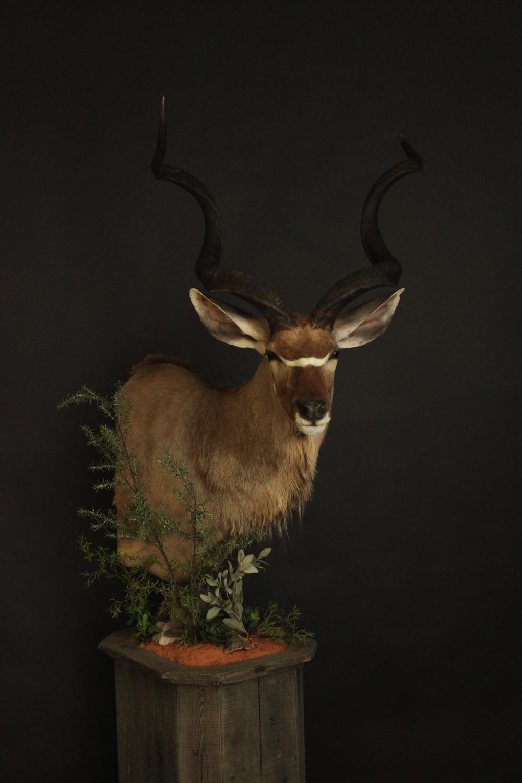 Barnboard Pedestal  Kudu (3)