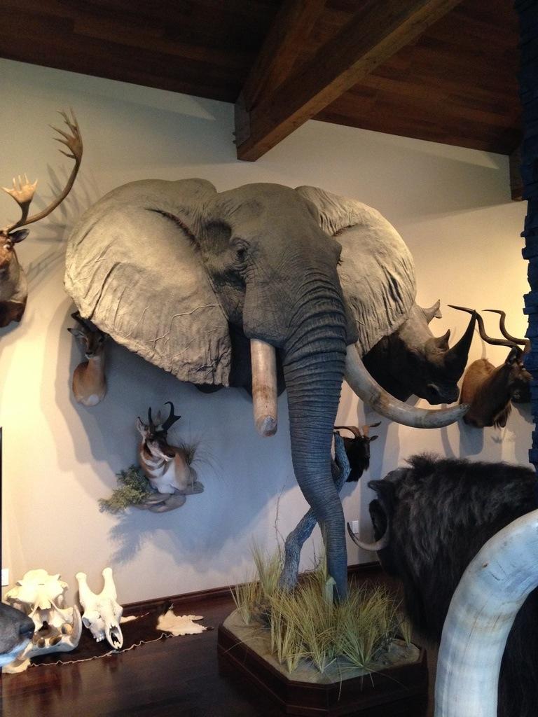 Head mount  Elephant (1)