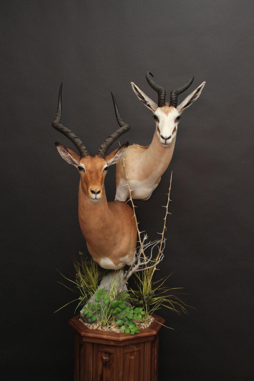 Double Pedestal on Walnut  Impala & Springbok  Double (1)