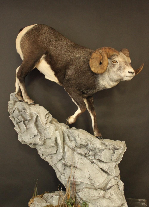 Lockhart Sheep.JPG