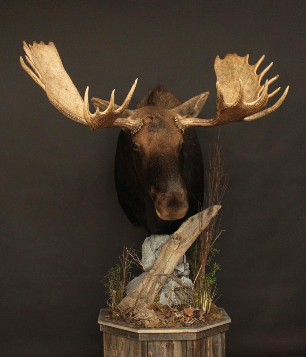 Barn Board Base  Moose01