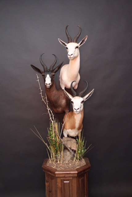 Triple Pedestal on Walnut  Springboks  Triple (3)